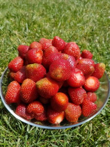 Eine Schüssel mit Erdbeeren